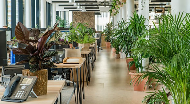 O ambiente de trabalho da JacadaTravel faz, de fato, os colaboradores sentirem-se em meio a natureza mesmo atuando todos os dias em um escritório instalado na grande Londres (Inglaterra)